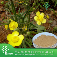 Catclaw Buttercup Root Extract 3% 4% 5%Alkaloids (Latin name Ranunculus ternatus Thunb)