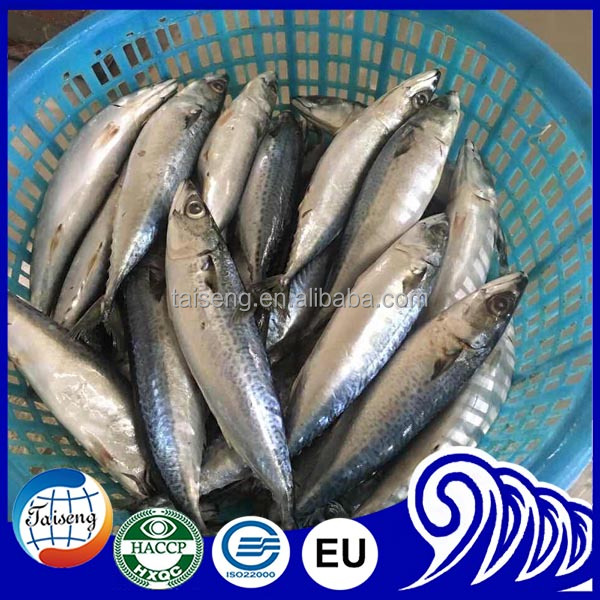 Frozen Fish For Seafood Pacific Mackerel Scomber Japonicus 400-600 Price
