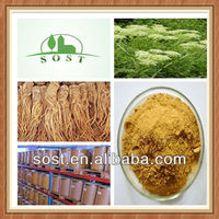 Natural Chinese Herbal Medicine Powder Angelica