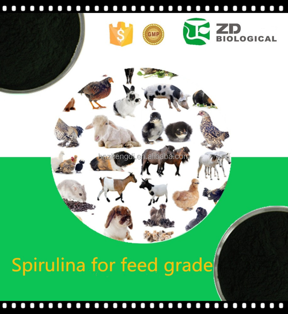 Organic plant extract powder 100 % pure spirulina powder for animals feed/cattle feed
