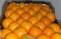 EGYPT ORANGES AND CITRUS FRUITS