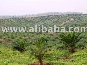 Palm Oil Plantation and Mills for Sale 10,000 hectares area in Riau Province Indonesia