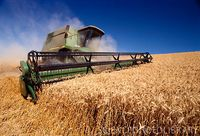 Try our Ukraine Feed Wheat