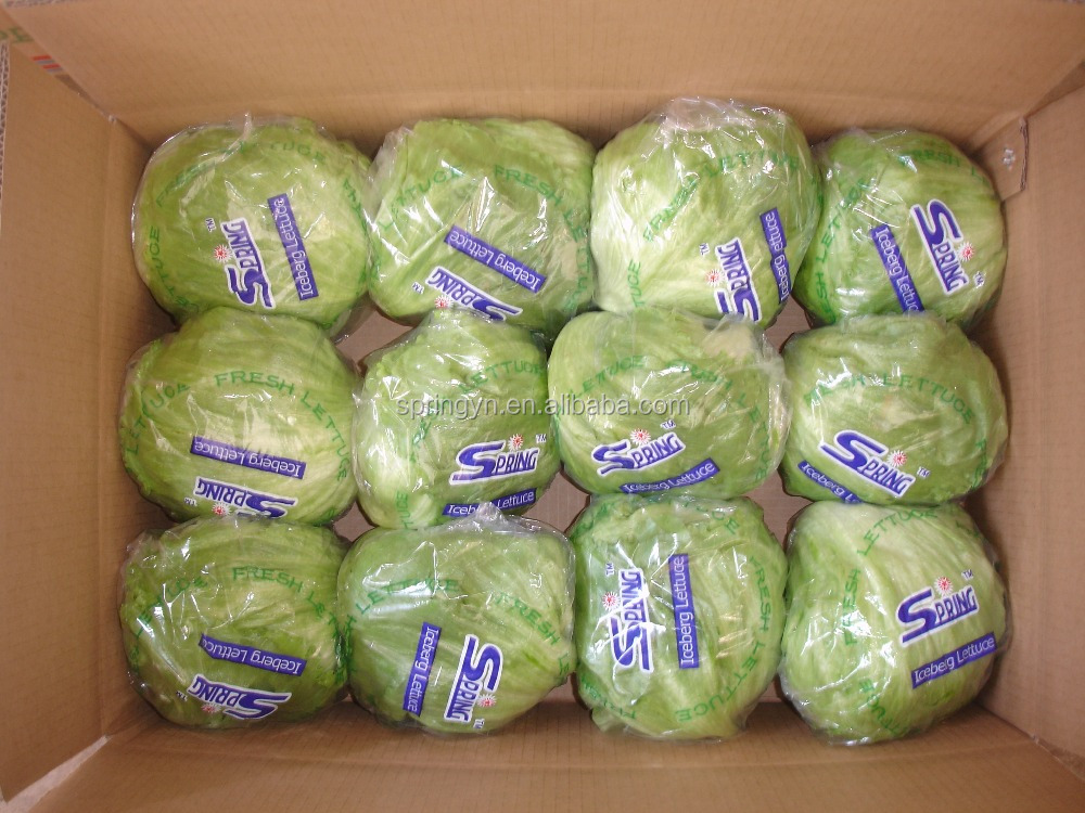 Manufacturer of Chinese Fresh Leaf Vegetables Fresh Leaf Lettuce