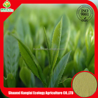 Green Tea P.E with high quality polyphenol by HPLC