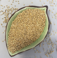 2171 Huang gu zi Low Price Wholesale New Crop Bulk Hulled Yellow Millet on Sale