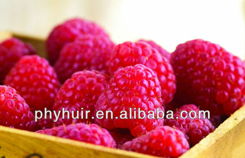Mulberry fruit P.E./ Mulberry P.E. 20%-28% Anthocyanosides
