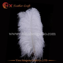 2016 cheap fluffy white ostrich feather 22 inch for sale
