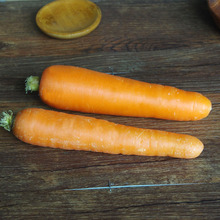 Hot Sell New Fresh Organic Carrot