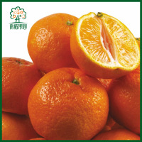 chinese mandarin orange without leaves fruit ponkan mandarin