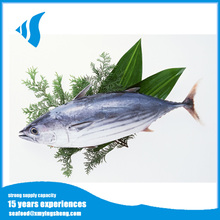 IQF whole round Frozen skipjack tuna fish for sale