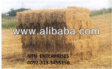 Wheat Straw for cows in dairy farms.