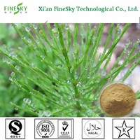 Supply Horsetail Extract, Horsetail P.E., Horsetail extract powder