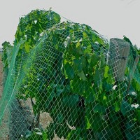 HDPE bird ner,anti bird ner,bird protection net for the fruit trees