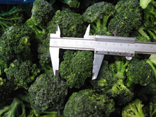 IQF FROZEN BROCCOLI FLORETS STEAM COOKED GOOD QUALITY SUPPLY