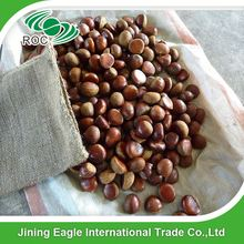 Chinese raw shandong fresh sweet chestnut