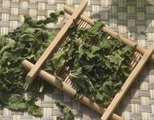 Natural Mulberry leaf tea Clearing lung and Reducing the Blood Fat