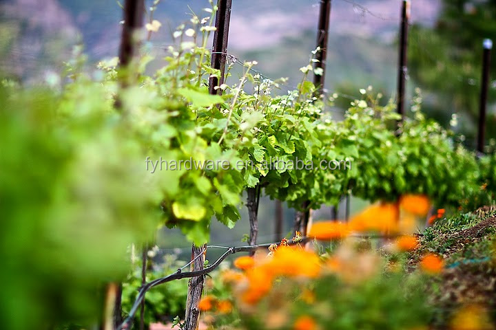 2016 hot selling Vine Plants Vineyard Grape Stake Hot Dipped Galvanized Metal Vineyard Trellis Post in the world