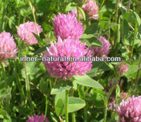 raw material Trifolium repens Linn/Red Clover whole plant