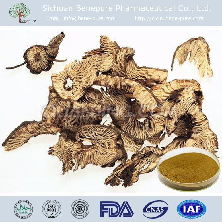Wholesale Cimicifuga racemosa Extract Triterpenes 2.5%,5%,8% HPLC