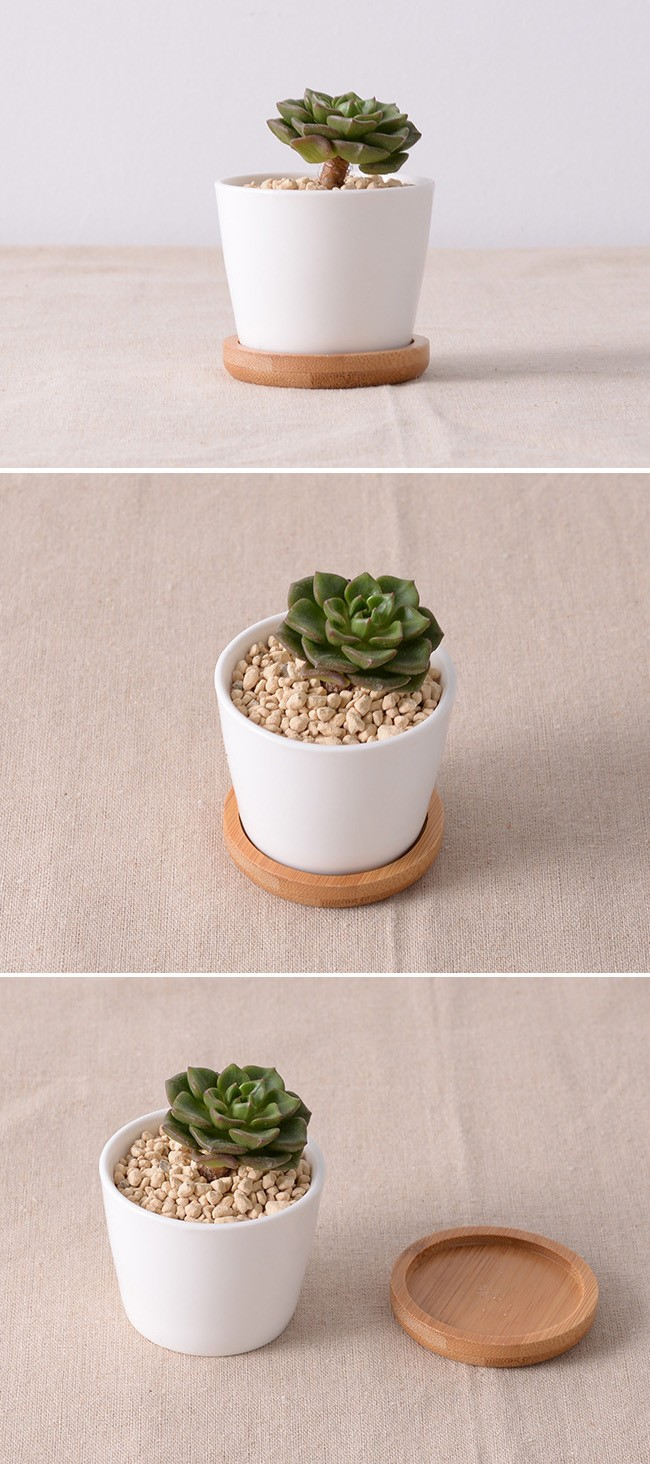 3 Inch Small Round Ceramic Planter Indoor Plant Tray Buy