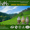 pure natural green tea extract /tea polyphenol/ catechin