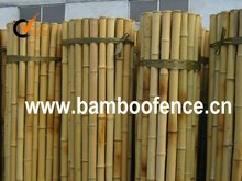 bamboo cane thick garden screening fencing fence panel rolled