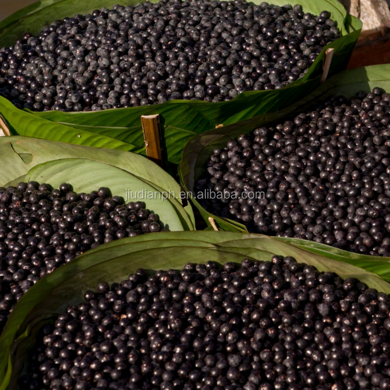 KOSHER Manufacturer Supply Acai Berry Powder Brazil