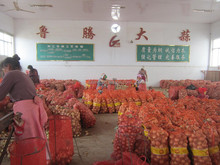 2015 crop fresh red onion yellow onions factory sale