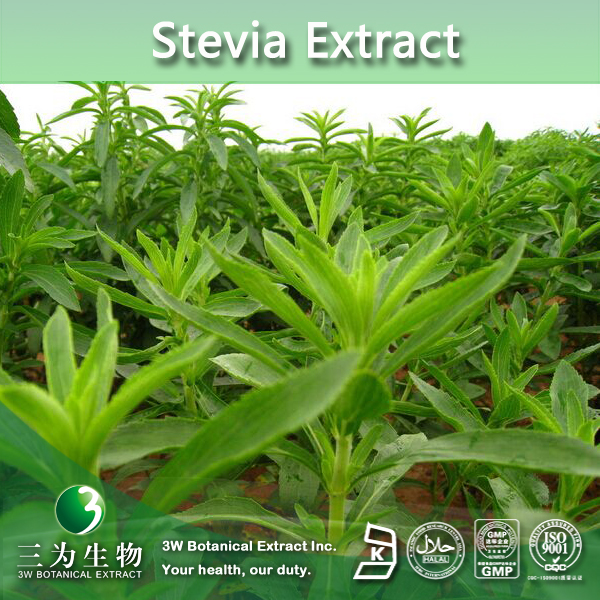 GMP Manufacturer Supply High Quality stevioside Extract 80~90% Steviosides, Reb. A 40%~98%