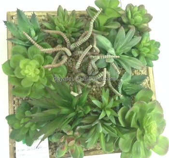 gorgeous decorative succulent plants green succulent plants for wall ornament