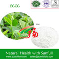 EGCG 95% Green Tea Extract