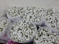 Exquisite hot selling single stem dahlia gypsophila for decoration