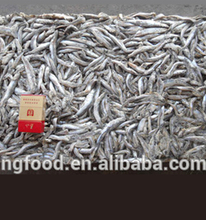 New Season Frozen Anchovy for fish meal