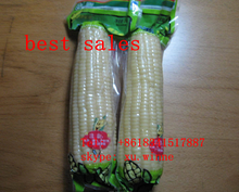 organic sweet frozen white corn maize cob for sale