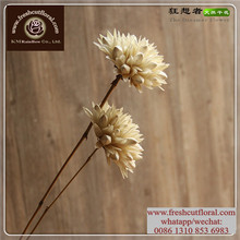 Supersize Dried Lilac Flowers Buy With Great Quality