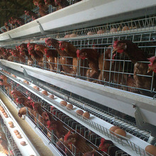 broiler breeding bird cage automatic chicken drinker layer house laying egg cages wire mesh