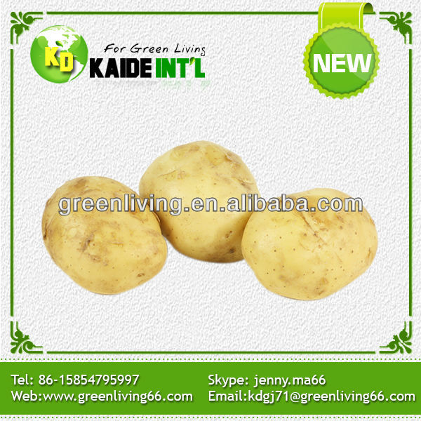 China specification of potatoes supplier(best quality and price)