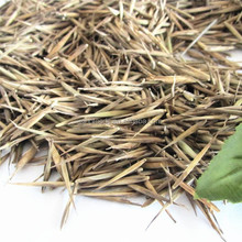 moso bamboo seeds High sprouting rate bamboo seeds for planting
