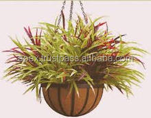 plants for baskets are used in gardens