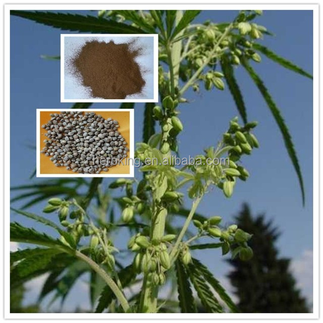FRUCTUS CANNABIS extract Hempseed Extract with best price