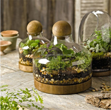 Garden wholesale vase clear glass terrarium plants with wooden base and wooden ball top