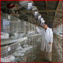 Easy Clean Commercial Rabbit Farming Cage With Dropping Board/Child And Mother Rabbit Cage
