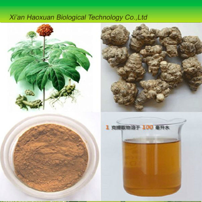 best quanlity natural sanchi / panax pseudoginseng extract powder for sale