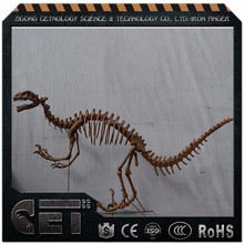 CET-A-807 life size dinosaur skeleton fiberglass waterproof animal skeleton