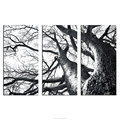 Nature Beauty Tree Branches Photo Group Canvas Printing Wall Decor Solid Pine Wood Framed Arts Room Decoration Wholesale