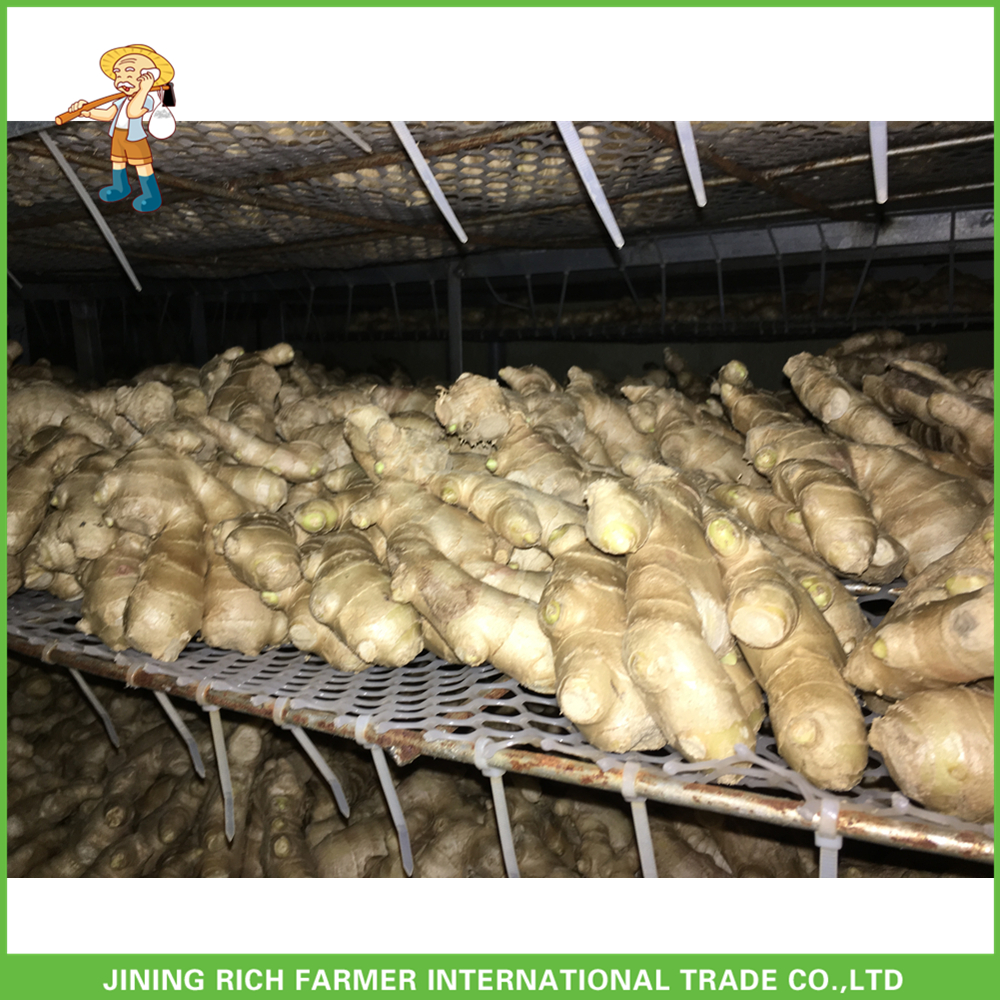 Certified GAP Raw Fresh Ginger Wholesale Air Dried Ginger 100g