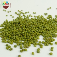 Best Quality New Crop Bulk Green