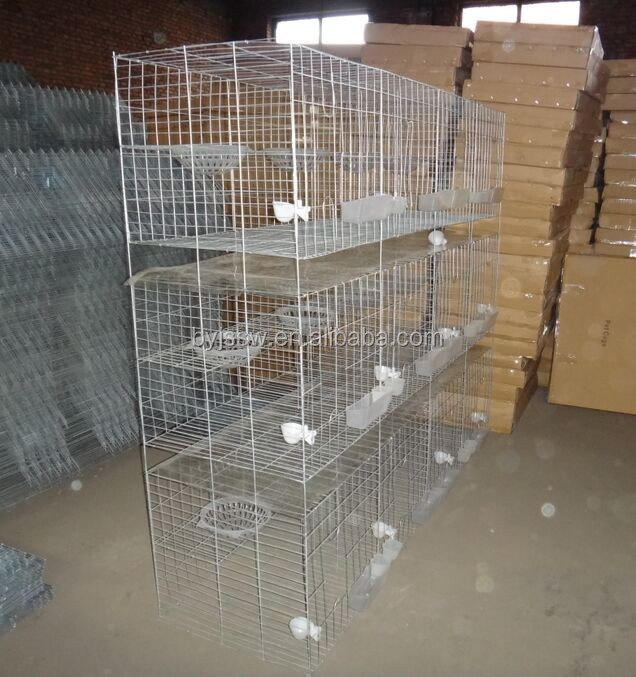 Pigeon Products/White Racing Pigeons For Sale