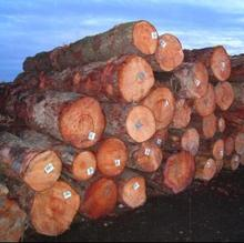 2013,New Zealand Radiata Pine Logs KI Grade NEW FOB PRICE UPDATE!!